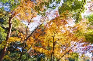 彩り豊かな盛秋の六義園の写真素材 [FYI04759789]