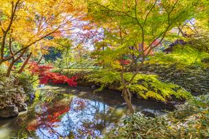 彩り豊かな盛秋の六義園の写真素材 [FYI04759790]
