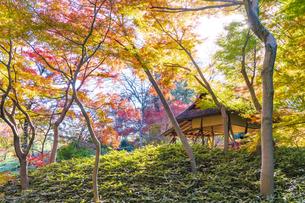彩り豊かな盛秋の六義園の写真素材 [FYI04759791]