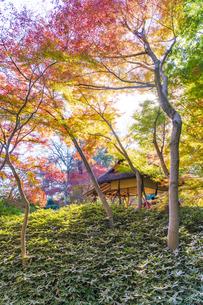 彩り豊かな盛秋の六義園の写真素材 [FYI04759792]