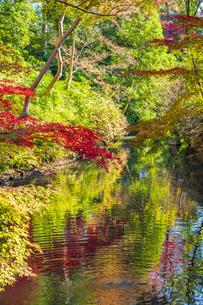 彩り豊かな盛秋の六義園の写真素材 [FYI04759795]