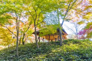 彩り豊かな盛秋の六義園の写真素材 [FYI04759796]
