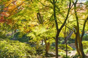 彩り豊かな盛秋の六義園の写真素材 [FYI04759797]