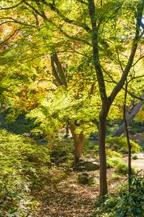 彩り豊かな盛秋の六義園の写真素材 [FYI04759798]