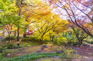 彩り豊かな盛秋の六義園の写真素材 [FYI04759799]
