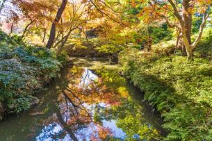 彩り豊かな盛秋の六義園の写真素材 [FYI04759800]