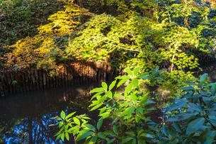 彩り豊かな盛秋の六義園の写真素材 [FYI04759805]