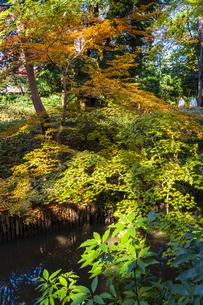 彩り豊かな盛秋の六義園の写真素材 [FYI04759806]