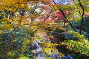 彩り豊かな盛秋の六義園の写真素材 [FYI04759808]