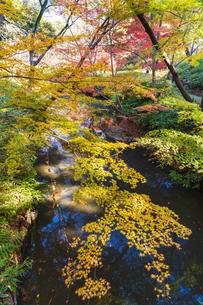 彩り豊かな盛秋の六義園の写真素材 [FYI04759809]