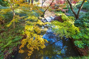 彩り豊かな盛秋の六義園の写真素材 [FYI04759811]
