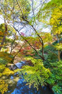 彩り豊かな盛秋の六義園の写真素材 [FYI04759813]