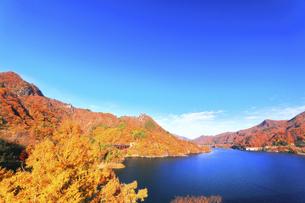 秋の八ッ場ダム 不動大橋より八ッ場大橋方向を望むの写真素材 [FYI04759816]