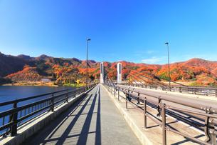 秋の八ッ場ダムに紅葉と八ッ場大橋の写真素材 [FYI04759823]