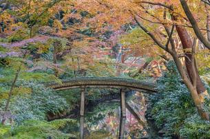 彩り豊かな盛秋の六義園の写真素材 [FYI04759826]