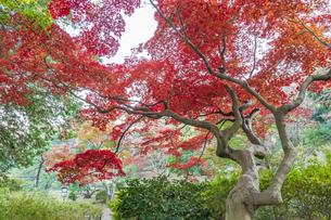 彩り豊かな盛秋の六義園の写真素材 [FYI04759829]