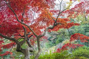 彩り豊かな盛秋の六義園の写真素材 [FYI04759830]
