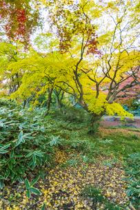 彩り豊かな盛秋の六義園の写真素材 [FYI04759834]