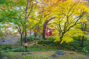 彩り豊かな盛秋の六義園の写真素材 [FYI04759835]