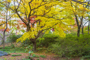 彩り豊かな盛秋の六義園の写真素材 [FYI04759837]