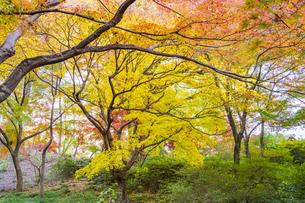 彩り豊かな盛秋の六義園の写真素材 [FYI04759838]