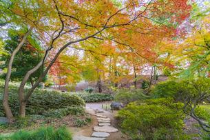 彩り豊かな盛秋の六義園の写真素材 [FYI04759839]