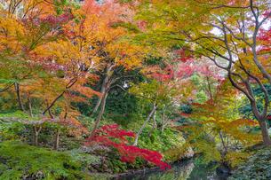 彩り豊かな盛秋の六義園の写真素材 [FYI04759842]