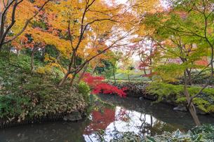 彩り豊かな盛秋の六義園の写真素材 [FYI04759844]
