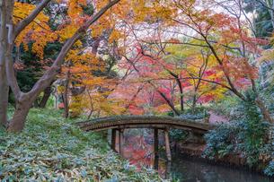 彩り豊かな盛秋の六義園の写真素材 [FYI04759846]