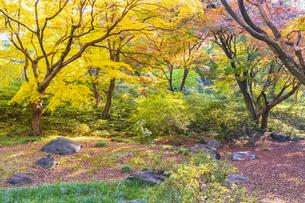 彩り豊かな盛秋の六義園の写真素材 [FYI04759853]