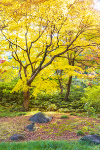 彩り豊かな盛秋の六義園の写真素材 [FYI04759858]