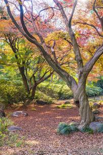 彩り豊かな盛秋の六義園の写真素材 [FYI04759859]