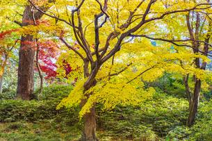 彩り豊かな盛秋の六義園の写真素材 [FYI04759865]