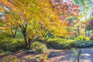 彩り豊かな盛秋の六義園の写真素材 [FYI04759866]