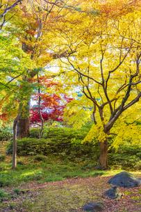 彩り豊かな盛秋の六義園の写真素材 [FYI04759867]