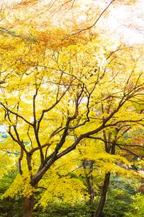 彩り豊かな盛秋の六義園の写真素材 [FYI04759868]