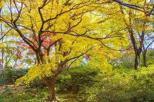 彩り豊かな盛秋の六義園の写真素材 [FYI04759869]