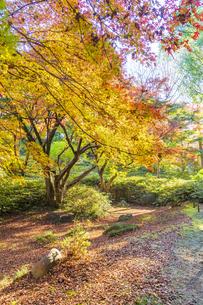 彩り豊かな盛秋の六義園の写真素材 [FYI04759870]