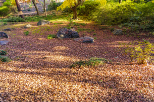 彩り豊かな盛秋の六義園の写真素材 [FYI04759871]