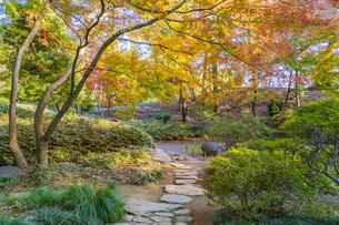 彩り豊かな盛秋の六義園の写真素材 [FYI04759873]