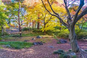 彩り豊かな盛秋の六義園の写真素材 [FYI04759875]