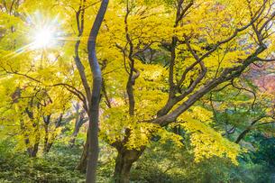 彩り豊かな盛秋の六義園の写真素材 [FYI04759876]