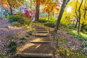 彩り豊かな盛秋の六義園の写真素材 [FYI04759878]