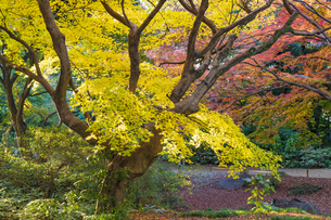 彩り豊かな盛秋の六義園の写真素材 [FYI04759881]