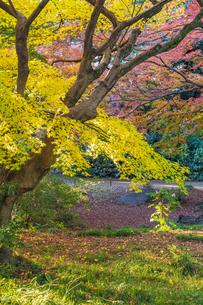 彩り豊かな盛秋の六義園の写真素材 [FYI04759891]