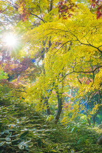 彩り豊かな盛秋の六義園の写真素材 [FYI04759892]
