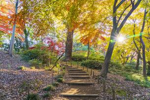 彩り豊かな盛秋の六義園の写真素材 [FYI04759893]