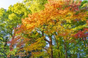 彩り豊かな盛秋の六義園の写真素材 [FYI04759898]
