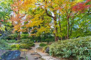 彩り豊かな盛秋の六義園の写真素材 [FYI04759899]