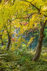 彩り豊かな盛秋の六義園の写真素材 [FYI04759901]